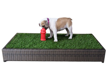 dog grass potty