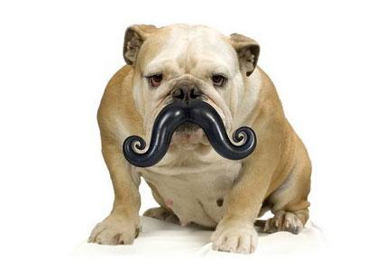 mustache dog ball