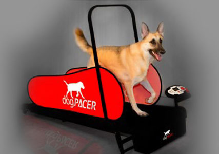 treadmill for dogs