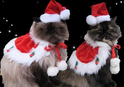cat christmas costumes