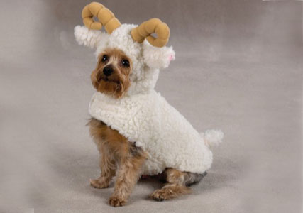 sheep dog costume